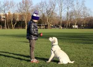 "Creme Retriever ""Oliver"", sitting politely for the ball."