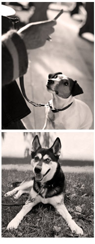 dogs being trained